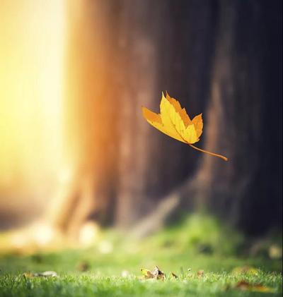 一叶落而知天下秋,立秋快乐